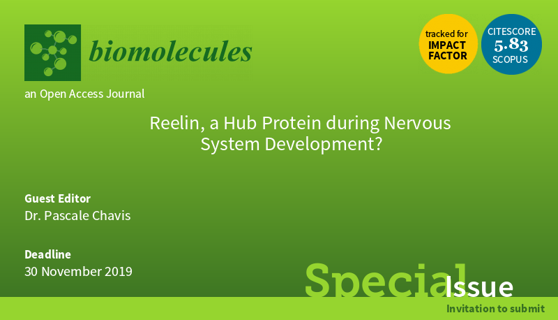 reelin_nervous_system_development-dark